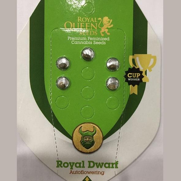 Royal Dwarf1