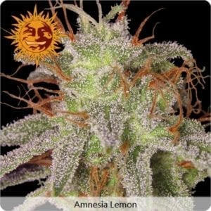 amnesia-lemon