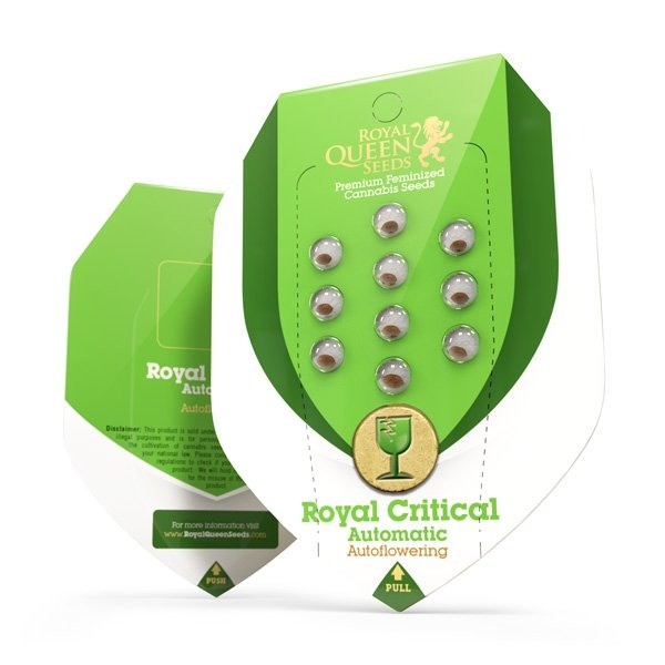 Royal Critical Automatic1